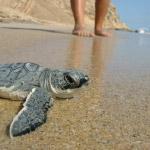 cs-turtle